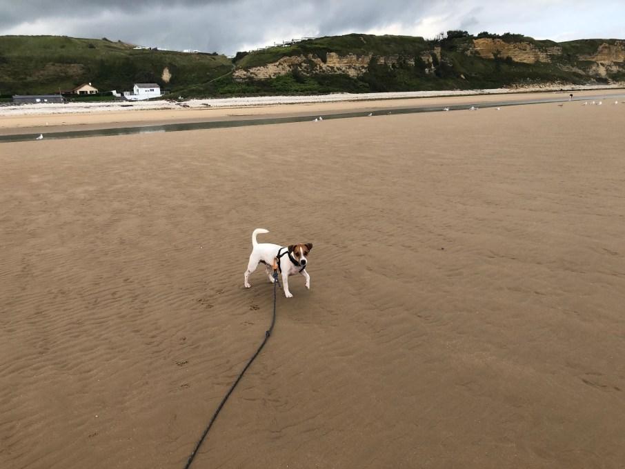 Omaha Beach chien