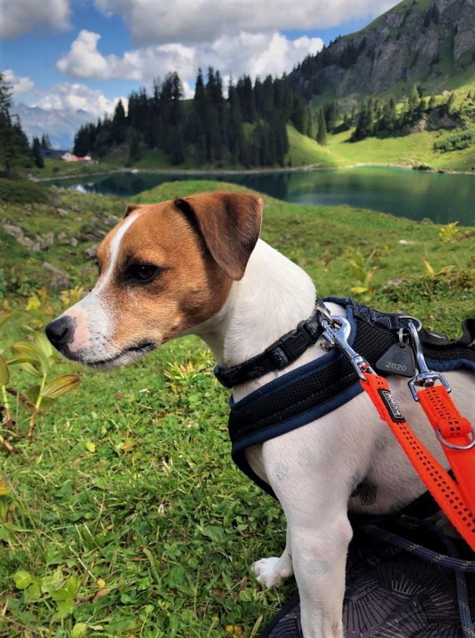 randonée au lac de lioson avec son chien