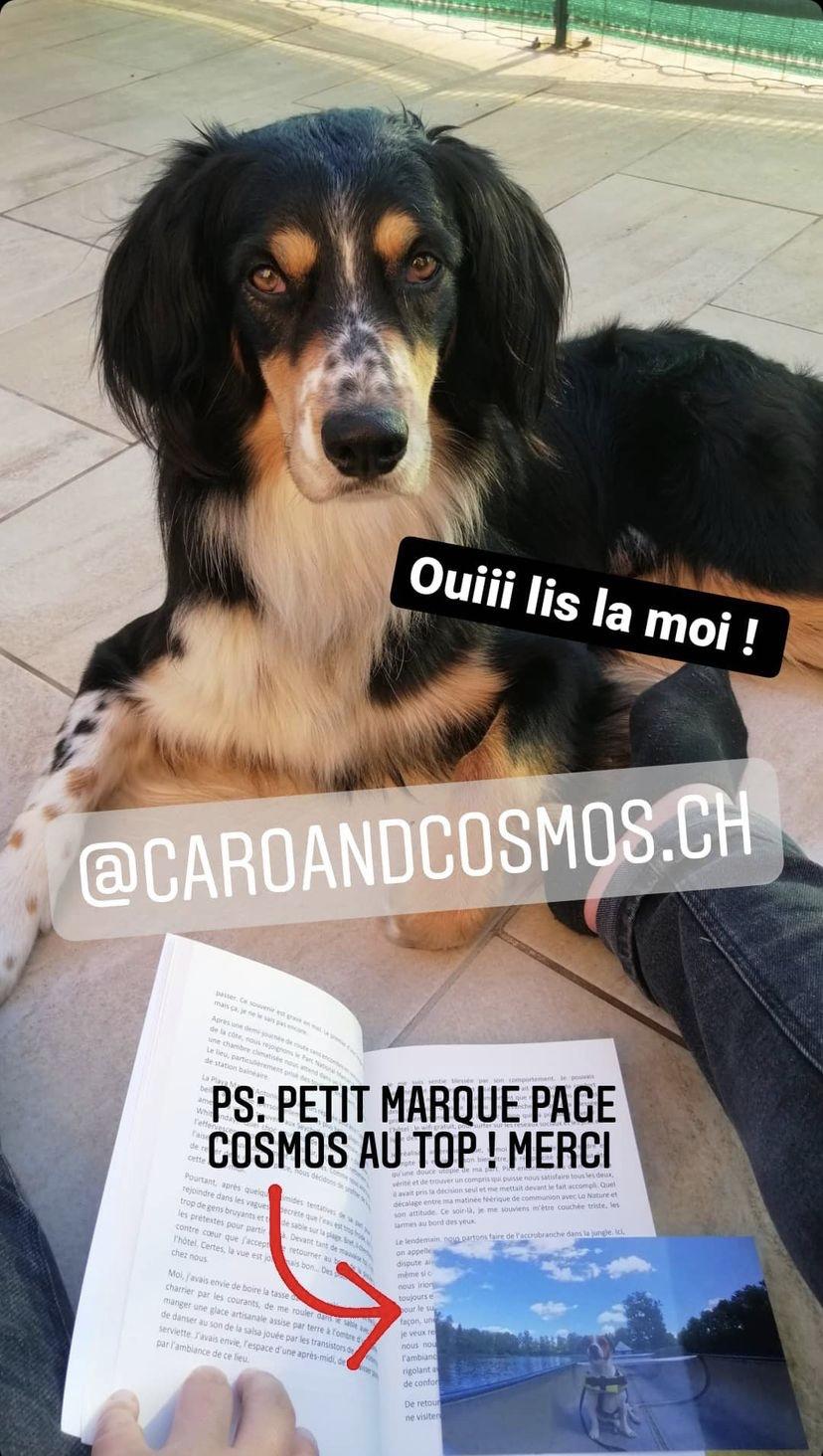mon chien s'appelle Cosmos