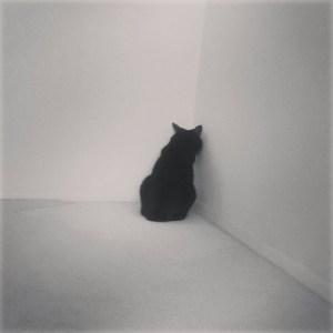 gato cara a la pared