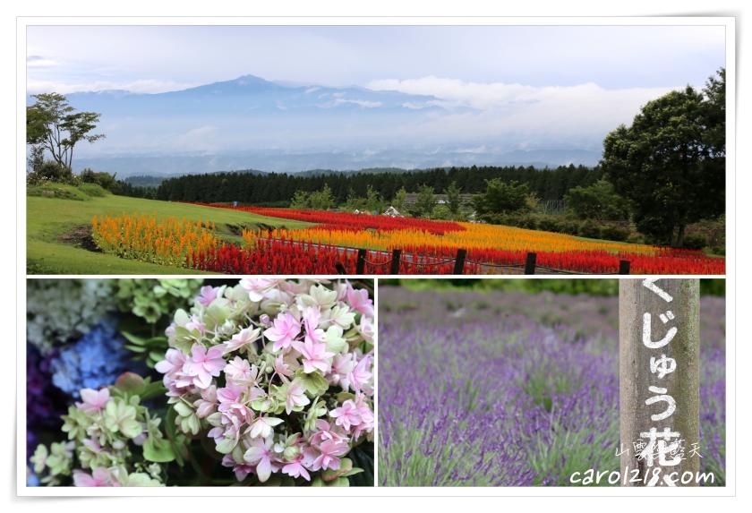 久住花公園~山嵐夢幻花海美景,夏季限定薰衣草花田及採藍莓體驗