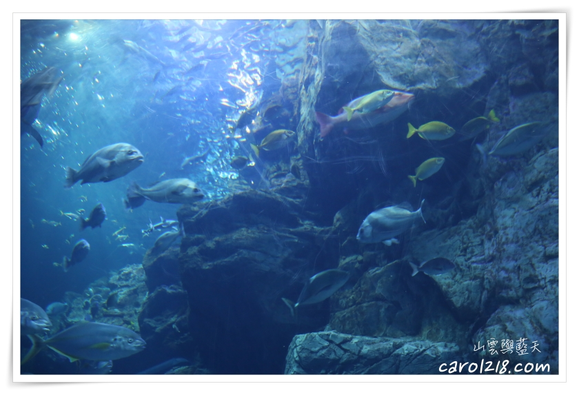 KKday,九州親子景點,九州親子遊,北九州自駕,北九州親子自由行,北九州親子遊,大分景點,海之卵,海之卵水族館