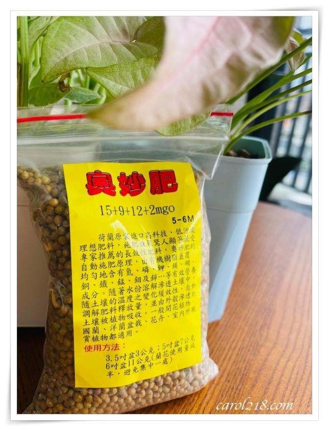 合果芋,室內植物,心葉椒草,懶人植物,紅粉佳人合果芋,綠精靈合果芋,耐陰耐旱植物,觀葉植物,超好種植物