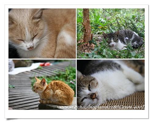 03貓咪睡覺