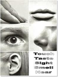 Senses of Human Being Human