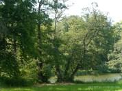 Im Schlosspark 5 (c) Carola Peters