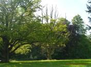 Im Schlosspark 1 (c) Carola Peters