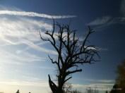 Trockener Baum (c) Carola Peters