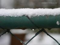 Zaun mit Schnee (c) Carola Peters