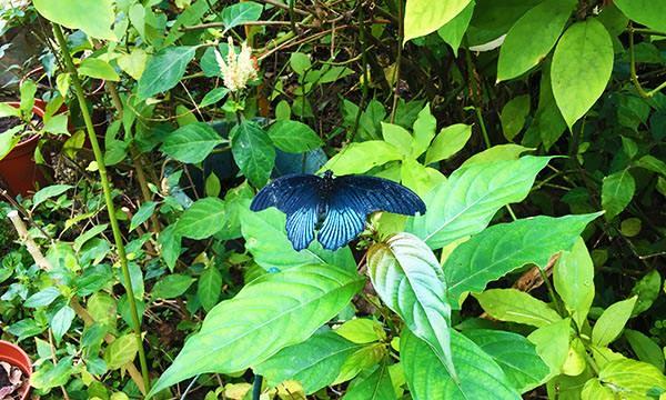 昆蟲館蝴蝶