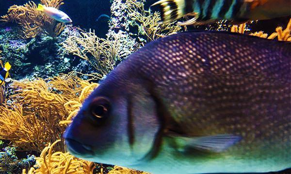 S.E.A.海洋館搶鏡頭的魚