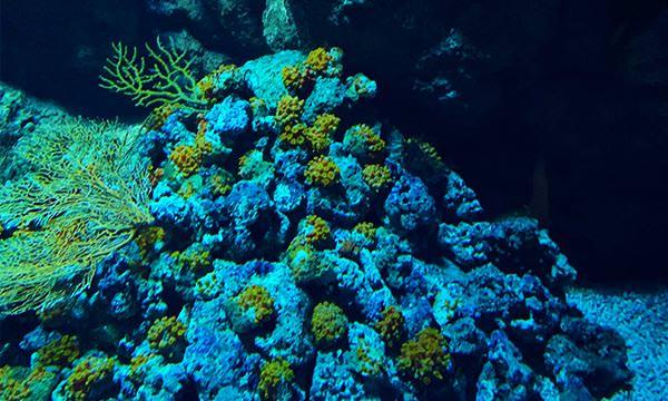 Xpark珊瑚礁