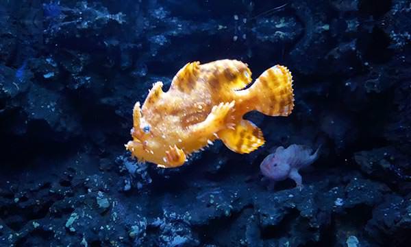 Xpark熱帶魚