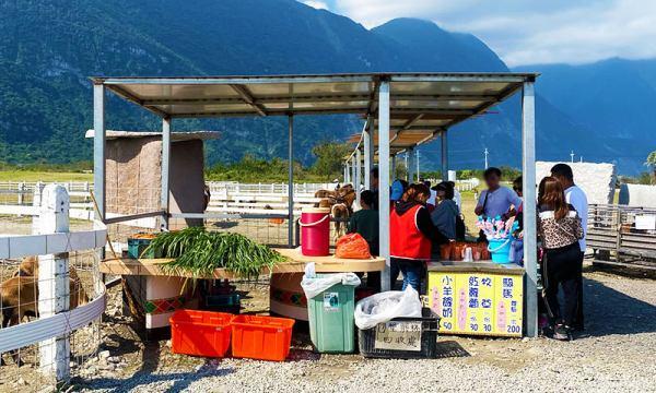 崇德瑩農場 動物餵食