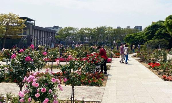 台北玫瑰園 五彩玫瑰園
