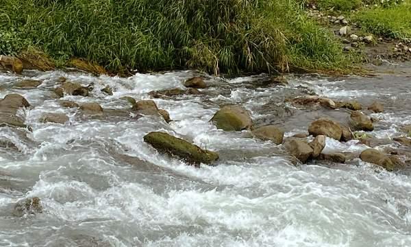 停在安農溪上石頭的中白鷺
