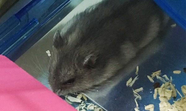 鼠用散熱板