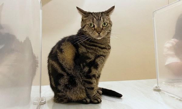 貓欸其他的貓店員