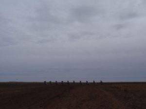 From a distance, Cadillac Ranch underwhelms.
