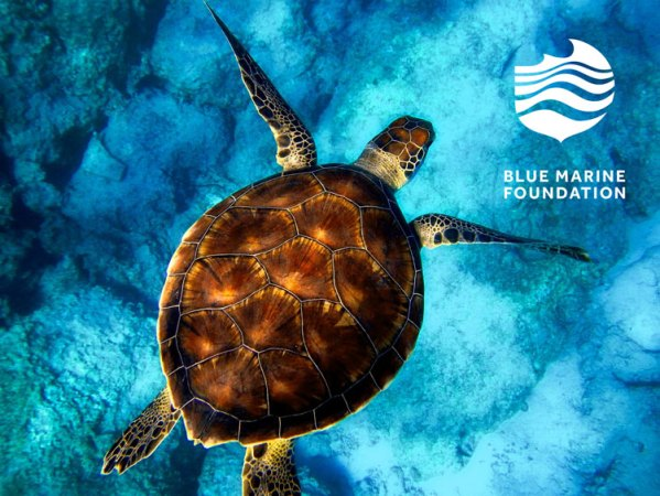 Blue-Marine-Foundation-Turtle