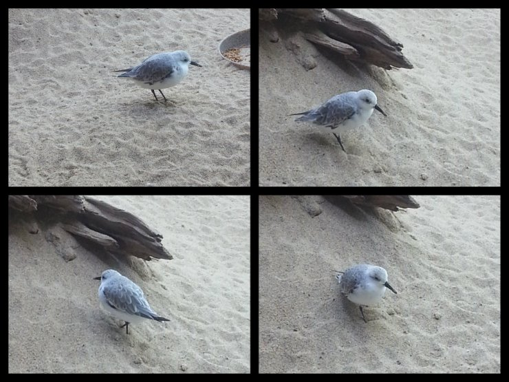 Seabird collage