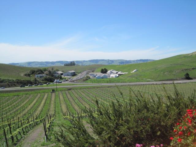 Nicholson vineyds