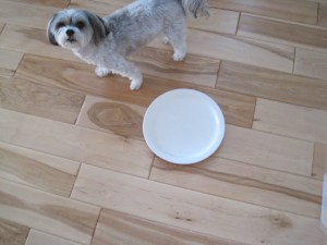 How not to feed a dog