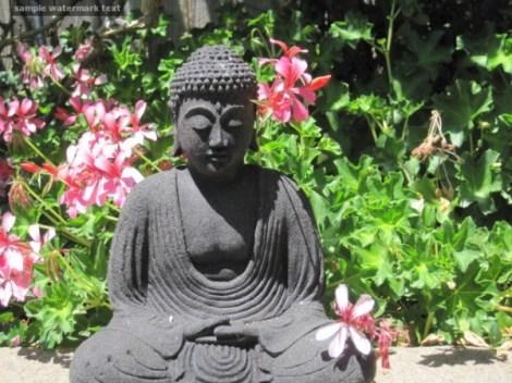 buddha blog flowrs watermk