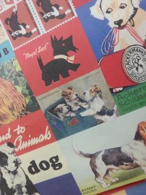 dogs angle blog