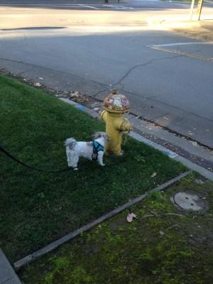 Cute dog photos alert!