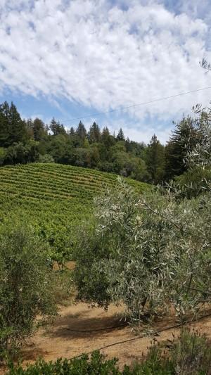 Byington vines