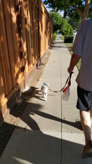 My daily walks are fun, too.