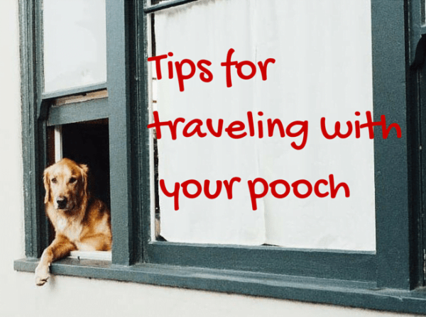 Tips for travelingwith your pooch
