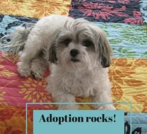 Inspiring, uplifting pet adoption stories