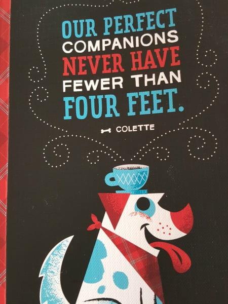 companion-animals