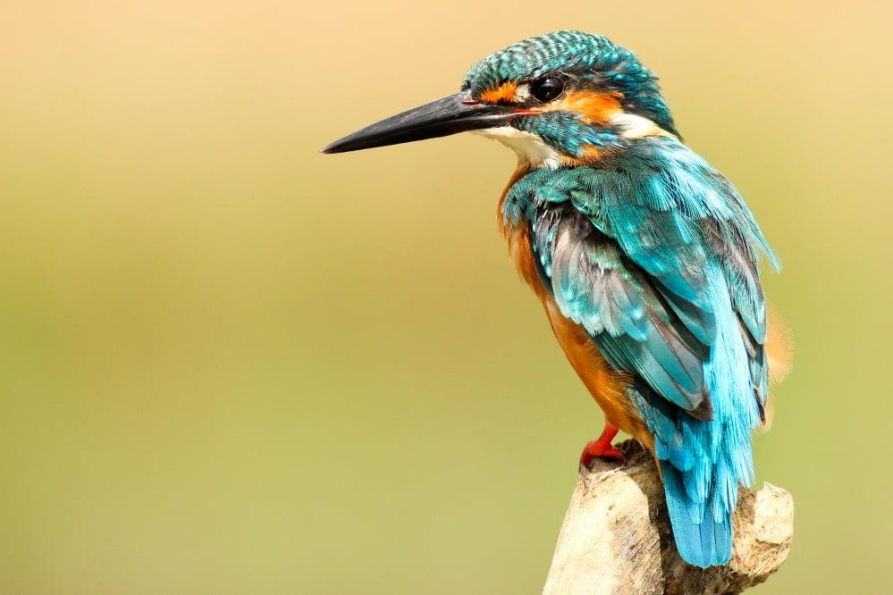 Caged bird still sings freedom songs