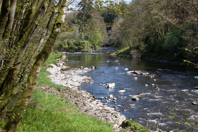 River Esk near Langholm 9 May 2015-1