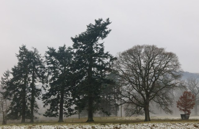 trees-in-mist-langholm-15-jan-2017-1-of-1