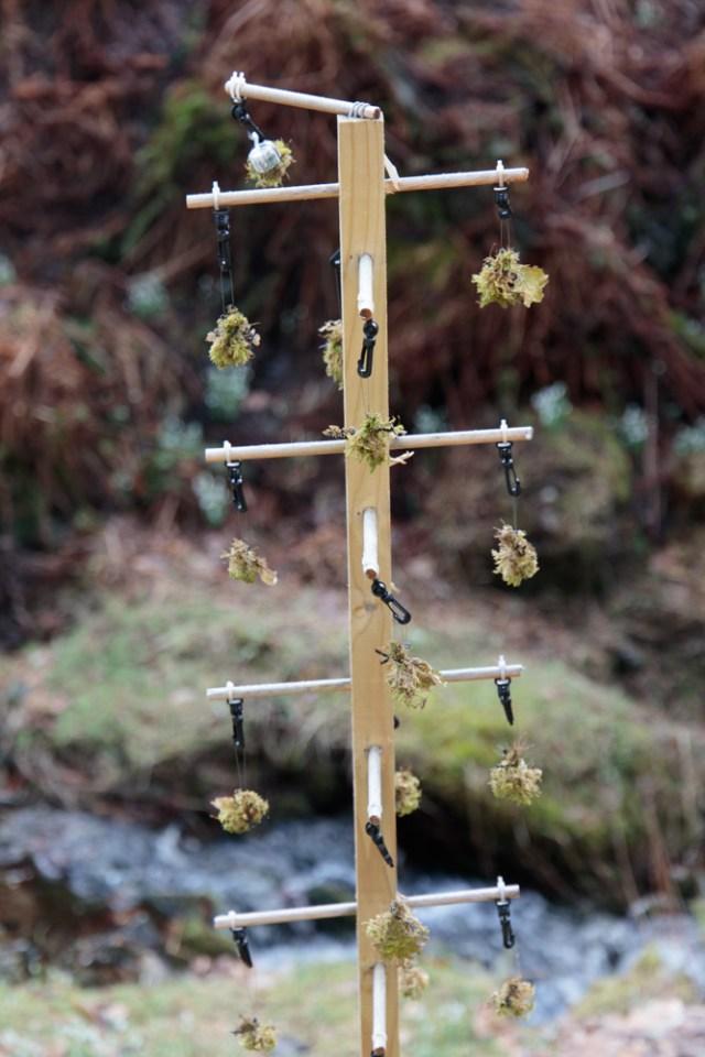 lichen-research-dawyck-5-feb-2017-1-of-1