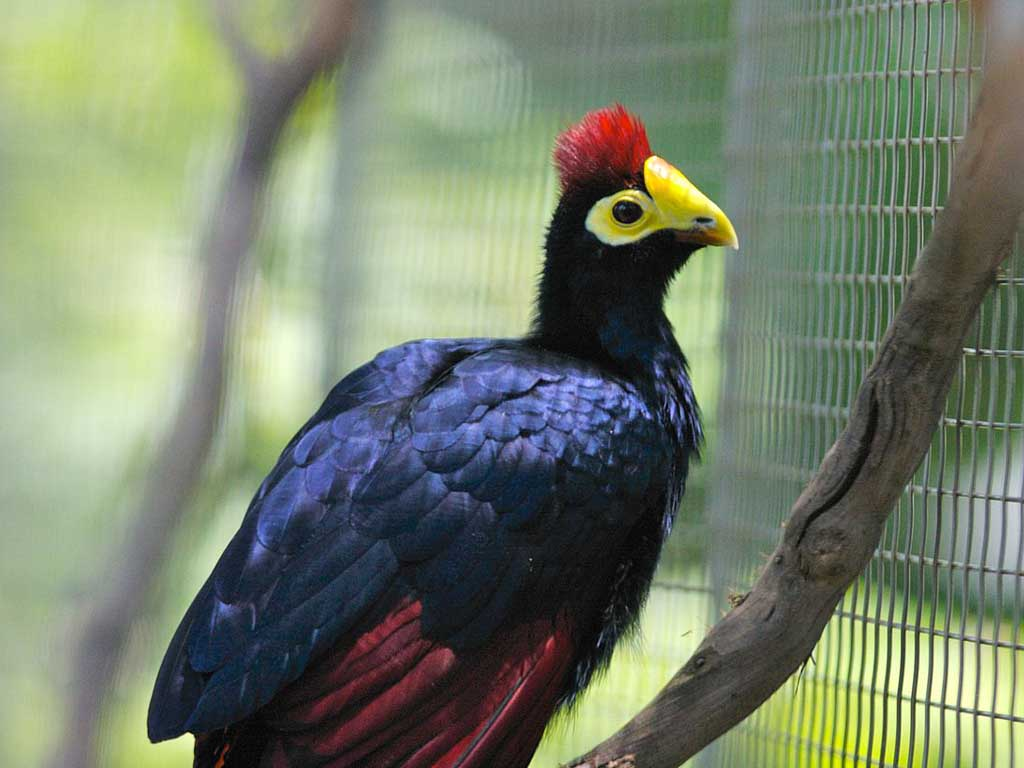 Black Bird With Orange Bill