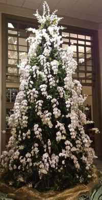 Christmas at Stowe Botanical Gardens