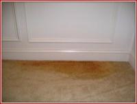 How to remove pet odors stains smells from damaged carpet