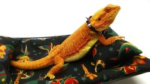 Carolina Designer Dragons Chaise Lounge Bearded