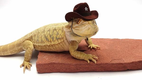 Carolina Designer Dragons Bearded Dragon Cowboy Hat Brown