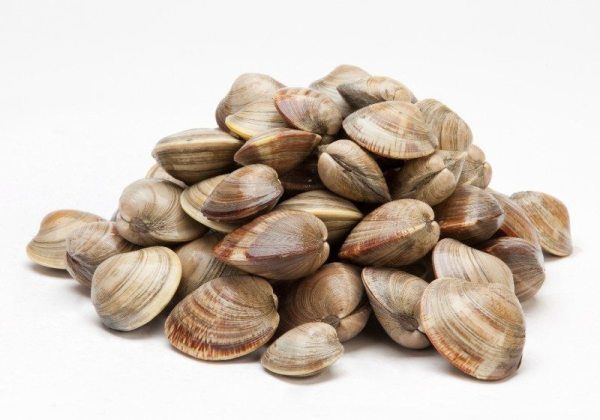 Middleneck Clams 100 Count Carolina Meat Fish Co