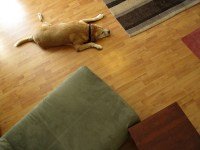 Best Pet-Friendly Flooring Options | Carolina Flooring ...