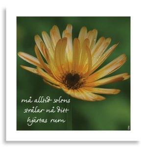 Kort-Hjartan-ma-alltid-solens_1316