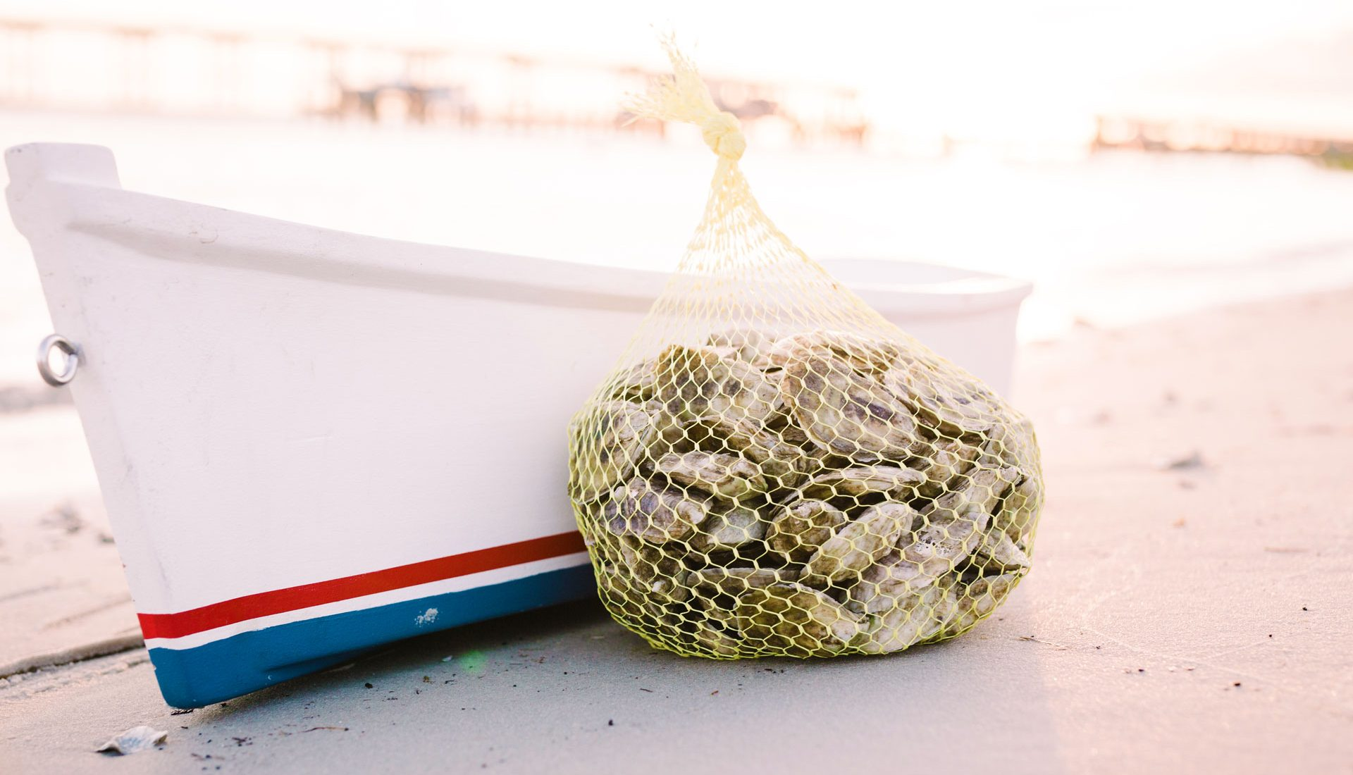 Carolina Gold Oysters! Order Shellfish Online!