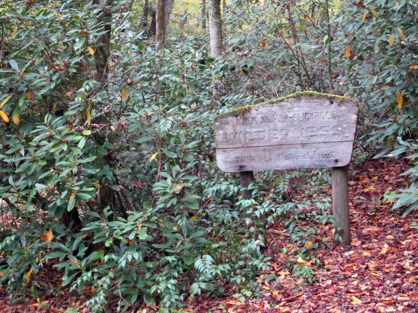 The U.S. Forest Service announced Tuesday it has begun revisions to a 15-year management plan of the Nantahala and Pisgah National Forests. Joyce Kilmer Memorial Forest, pictured here in October, is a part the Nantahala National Forest's Cheoah Ranger District. Angie Newsome/Carolina Public Press