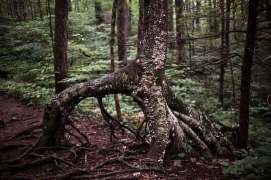 The upper loop trail in Joyce Kilmer hosts a diverse cove forest, featuring a variety of tree species. It is part of the Nantahala National Forests, and close to where firefighters are fighting a wildfire. (Mike Belleme/Carolina Public Press)